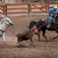 Family Rodeo